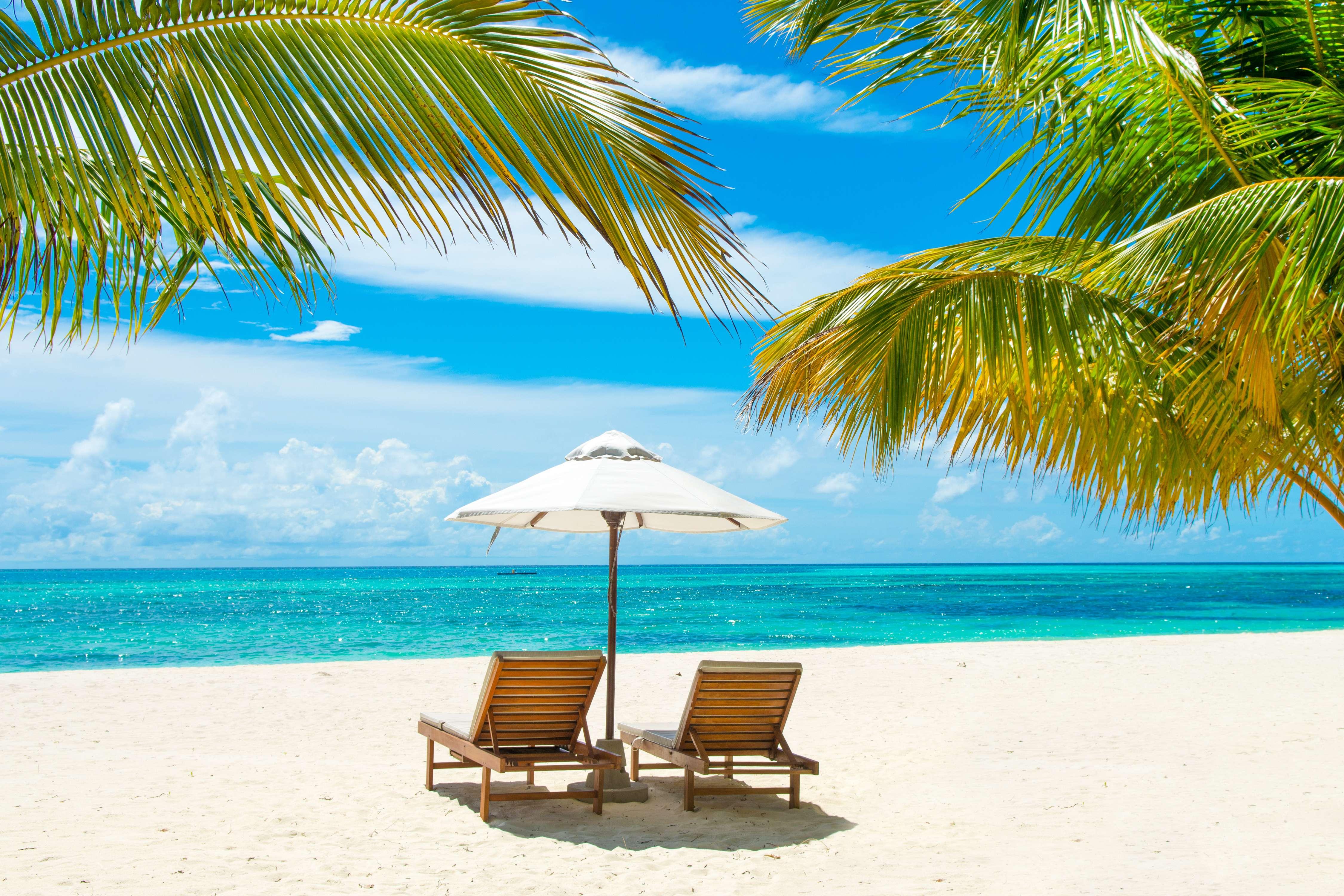 32 Sanson | outdoor beach tree